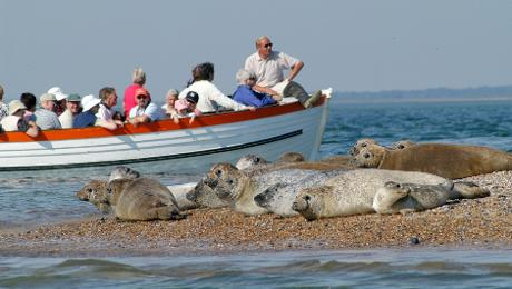 Blakeney Seal Trips – 1st February -31st October