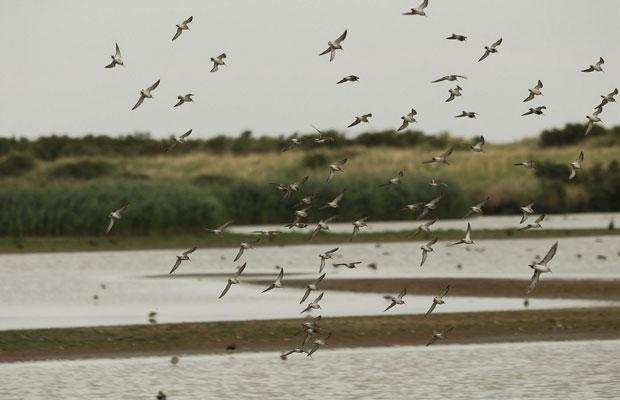 Titchwell Marsh Nature Reserve Events