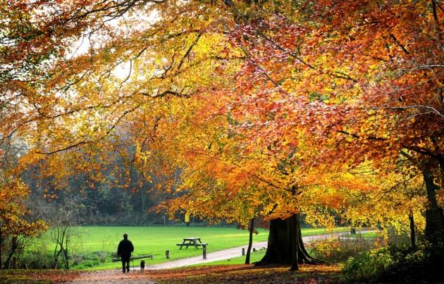 Norfolk's Top Open Gardens