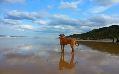 Dog friendly parks and beaches