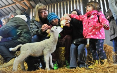 Lamb bottle-feeding at Wroxham Barns till 1st July!