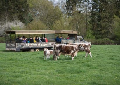Pensthorpe Natural Park – just 5 miles away!